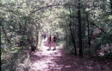Students walking on path in woods at East Campus